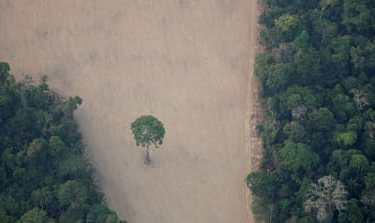 An aerial view shows a deforested plot of the Amazon near Porto Velho, Rondonia State, Brazil. [File: Ueslei Marcelino/Reuters]