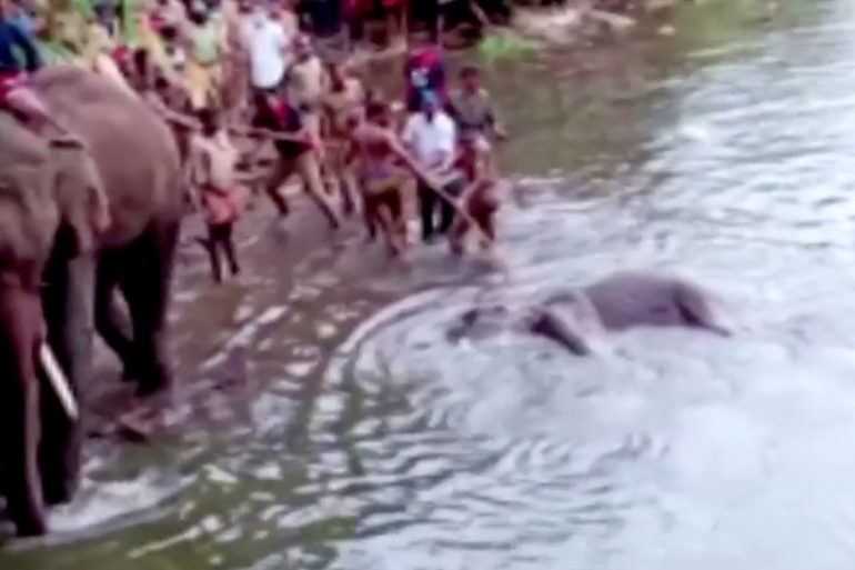 People pull the pregnant elephant's body out of water in Kerala's Palakkad district in this May 27 photo [Reuters]
