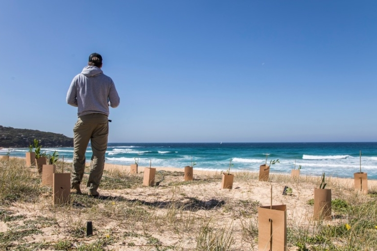 Landcare carries out dune replanting work in Curl Curl in Sydney last year. Concerns are growing that environmental measures needed to curb beach erosion will be delayed or ignored as coronavirus dominates budgets [Landcare/Supplied]