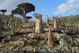 Yemen: UAE-backed separatists take control of Socotra