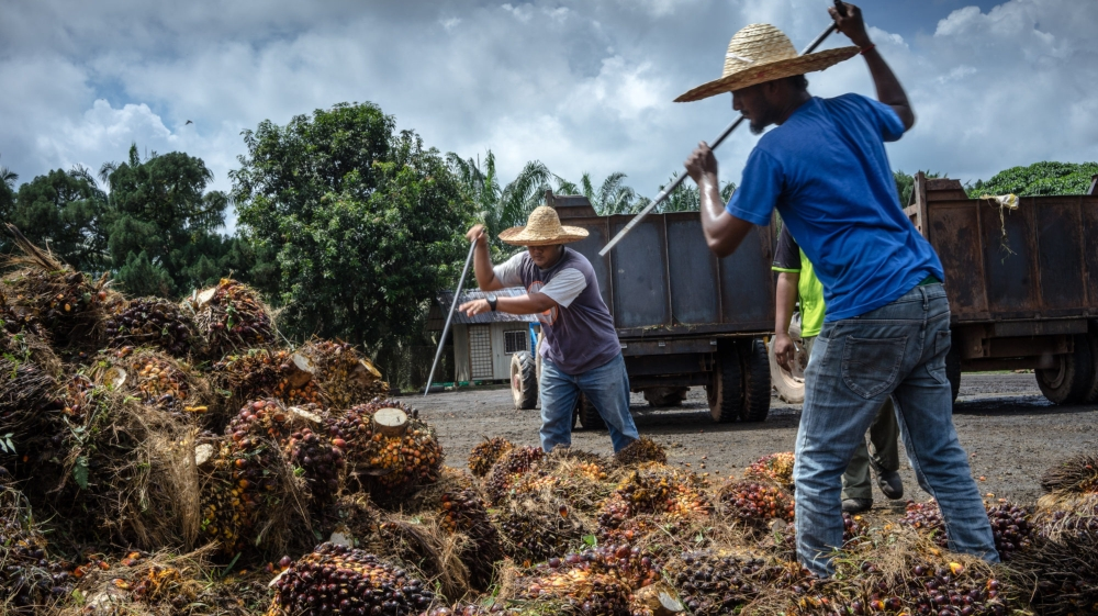 US bans palm oil imports from Malaysian producer FGV thumbnail