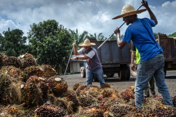 Malaysia is one of the world's largest producers of palm oil [File: Sanjit Das/Bloomberg]