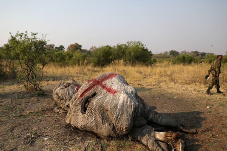 Hundreds of elephants have died mysteriously in Botswana, officials have ruled out poaching [File: Siphiwe Sibeko/Reuters]