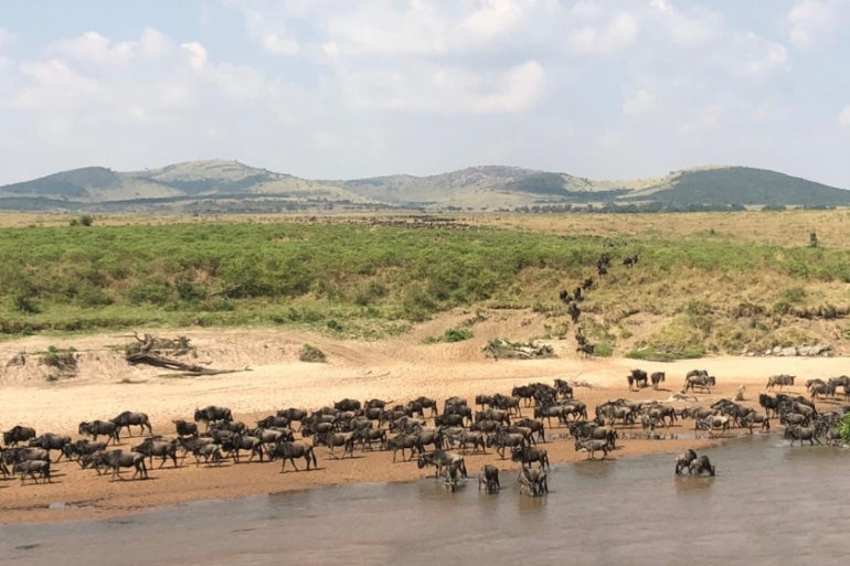 Thousands of wildebeest cross the Mara or Sandy rivers from the Serengeti National Park in Tanzania into the Maasai Mara in Kenya every year [File: Evelyn Kahungu/Al Jazeera]