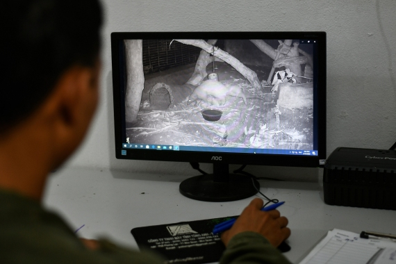 Head keeper Tran Van Truong watches video footage of a newly born baby pangolin and its mother at Save Vietnam's Wildlife. [Manan Vatsyayana/AFP]