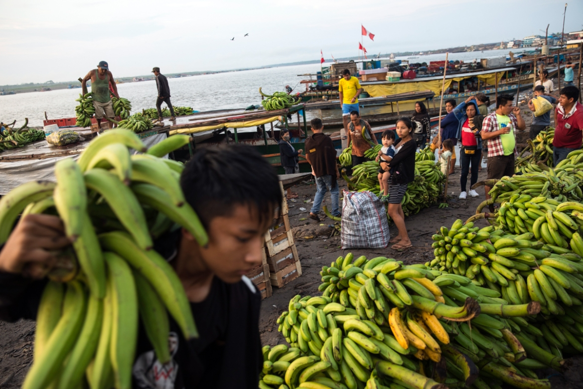 Pucallpa's bustling port where wood, bananas and other fruit are loaded onto ships for export, is believed to be one of the main sources of the contagion. [Rodrigo Abd/AP Photo]