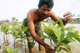 Trying to revive and protect Indonesia's mangroves