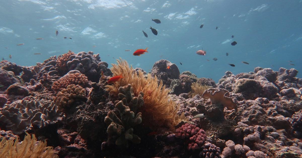 Global heating kills half the corals on the Great Barrier Reef – Al Jazeera English