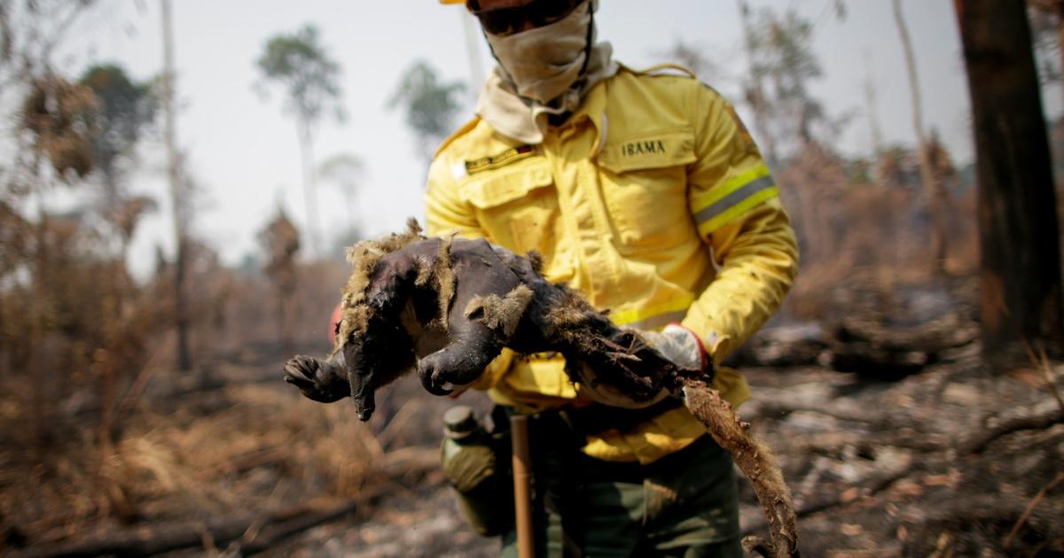 Next pandemic? Amazon deforestation may spark new diseases thumbnail