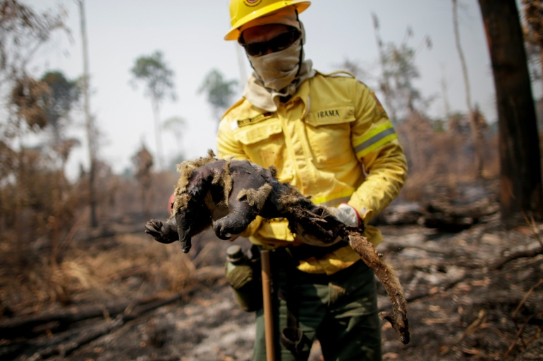 Cleio Junior, a fire brigade member for the Brazilian Institute of the Environment and Renewable Natural Resources, holds a dead anteater while attempting in August to control hot points in a tract of the Amazon jungle near Apui, Amazonas State, Brazil [File: Ueslei Marcelino/Reuters]