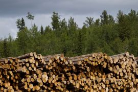 P&G says its logging practices in Canada's forests are sustainable, but environmentalists say they do not go far enough [File: Ben Nelms/Bloomberg]