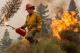 In this file photo from September, a firefighter uses a drip torch to set a backfire to protect mountain communities from the Bobcat Fire [David McNew/Getty Images]