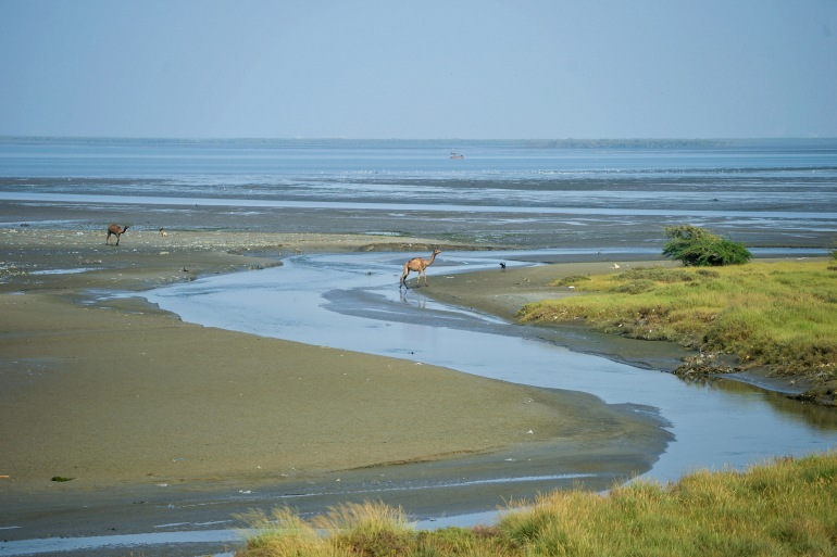 $50bn Housing Project Threatens Mangroves On Pakistani Island
