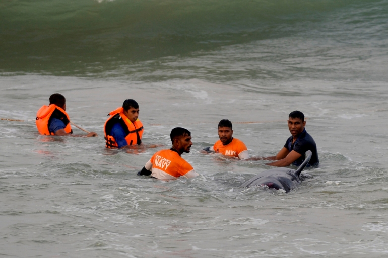 Sailors from the Sri Lankan Navy try to push back a stranded pilot whale into the deep water in Panadura following a mass beaching [Lakruwan Wanniarachchi/AFP]