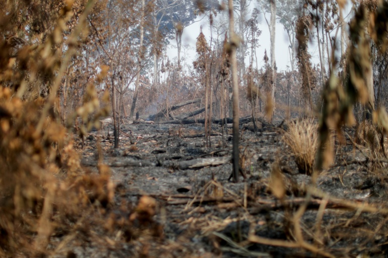 Deforestation in Brazil's Amazon rises for first time in 4 months | Latin America