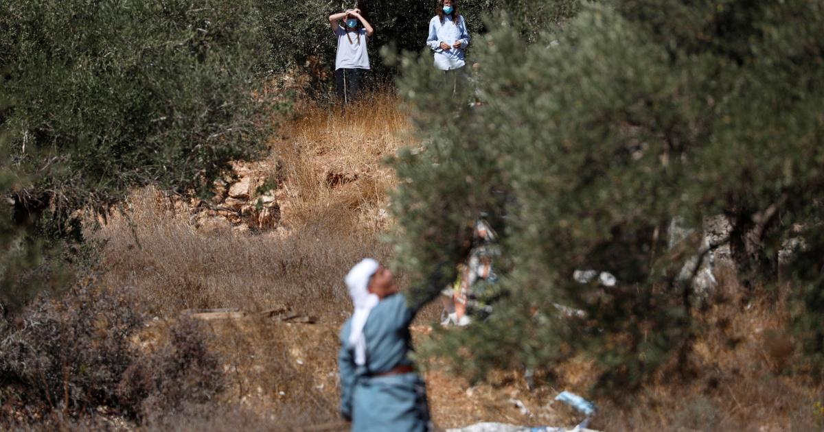 Agresi pemukim mendatangkan malapetaka pada warga Palestina di beberapa tingkat panen zaitun thumbnail