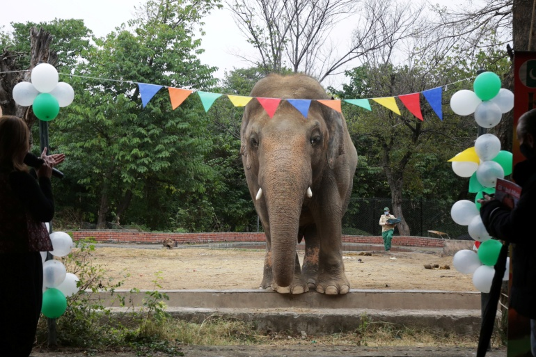 Kaavan is set to be flown to a wildlife sanctuary in Cambodia on Sunday [Saiyna Bashir/Reuters]