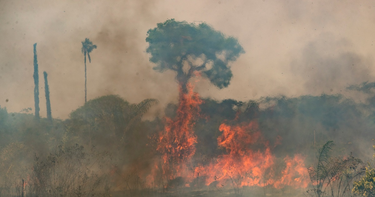Deforestation in Brazil's Amazon surges to 12-year high
