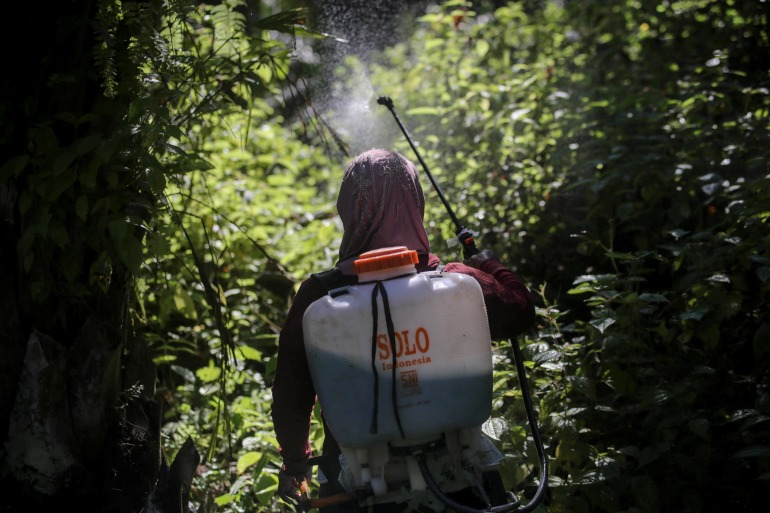 A female worker sprays herbicide in a palm oil plantation in Sumatra, Indonesia [Binsar Bakkara/AP]