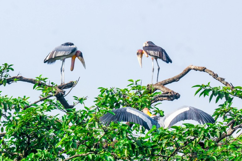 Purnima Devi Barman grew up seeing storks flocking freely near her home in Assam, India [Anupam Nath/Al Jazeera]