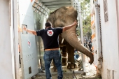 Elephant Kaavan, 36, was finally relocated from grim conditions at Marghazar Zoo in Islamabad to Cambodia [Courtesy: Four Paws]