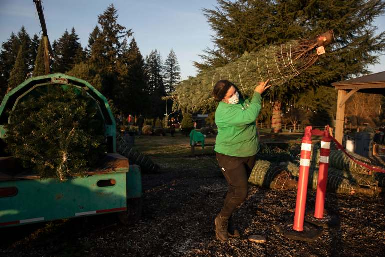 It is early in the season, but both wholesale tree farmers and small cut-your-own lots are reporting strong demand, with many opening well before Thanksgiving Day [File: Paula Bronstein/AP Photo]
