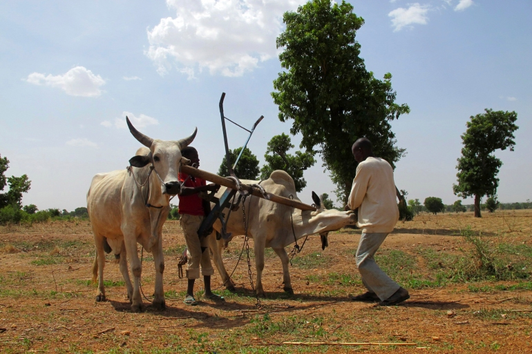 Gangs often raid villages in northwest Nigeria, stealing cattle, kidnapping for ransom and burning homes after looting supplies [File: Joe Brock/Reuters]