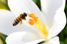 A project to assess how companies are contributing to the death of honey bees is among new initiatives to encourage firms to incorporate environmental costs into their accounts [File: Toby Melville/Reuters]