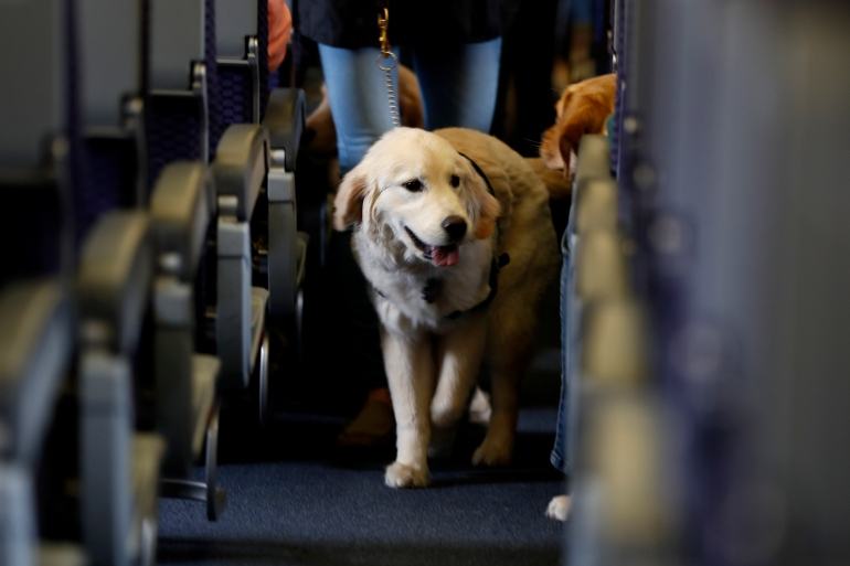 Starting in 30 days, the new rule will mean only service dogs are allowed on planes, not emotional support animals [File: Julio Cortez/AP Photo]