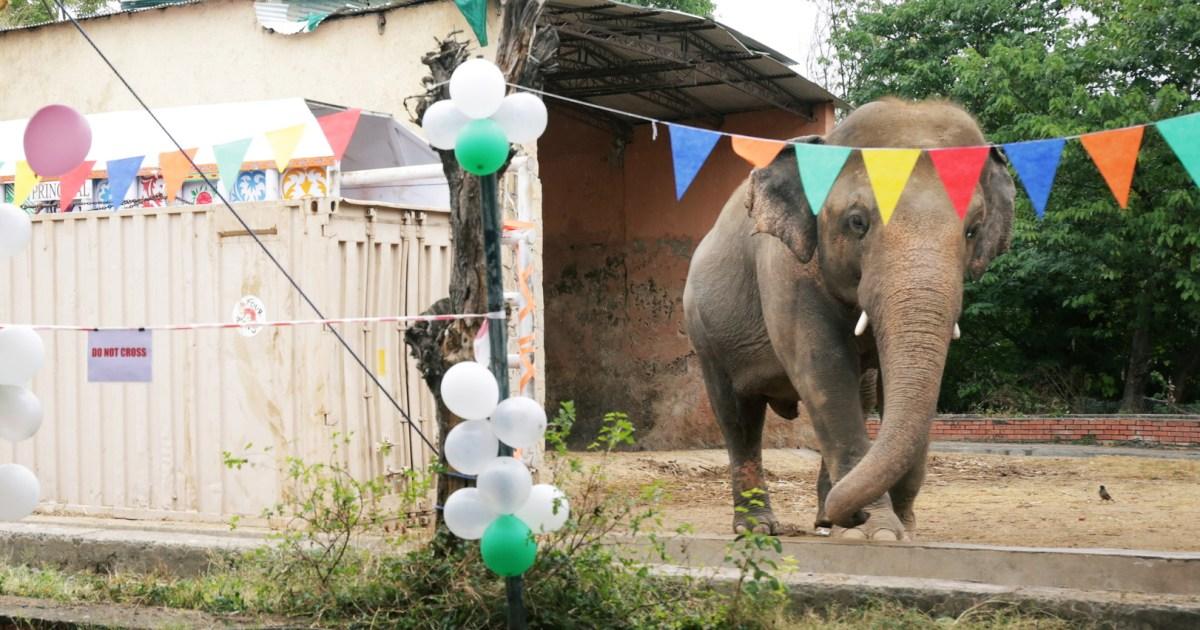 www.aljazeera.com: Pakistan's 'loneliest elephant' starts new life in Cambodia