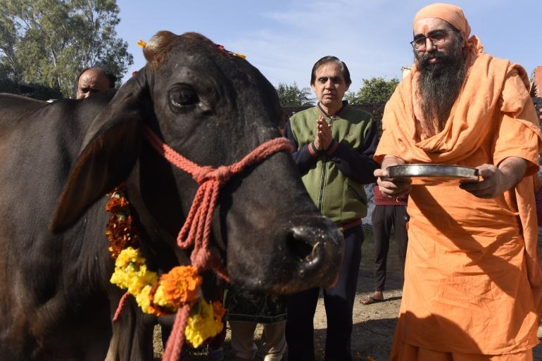 Ein hinduistischer heiliger Mann verehrt zusammen mit Anhängern eine Kuh während des Gopashtami-Festivals, das Lord Krishna und Kühen gewidmet ist, in Amritsar, Indien [Datei: Narinder Nanu / AFP]