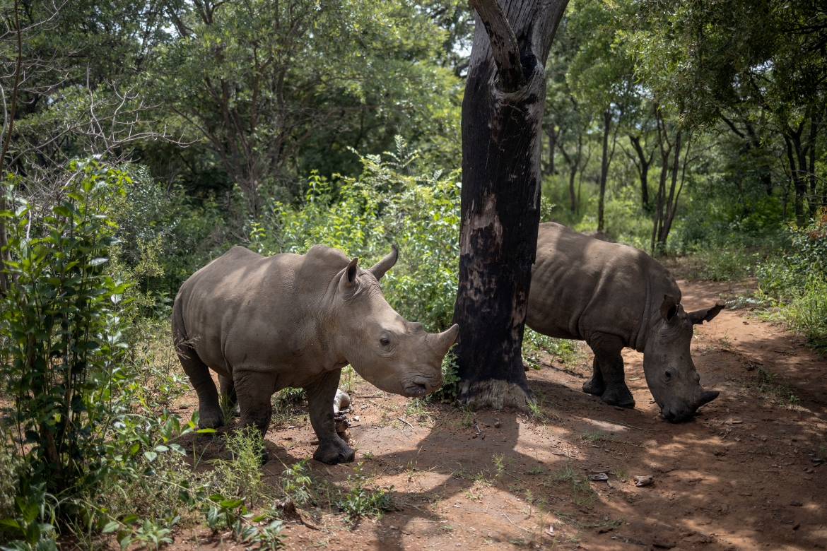 Carefully hidden in the bush of South Africa's Limpopo province, the Rhino Orphanage is the first specialised non-commercial centre that cares for orphaned and injured baby rhinos. [Michele Spatari/AFP]