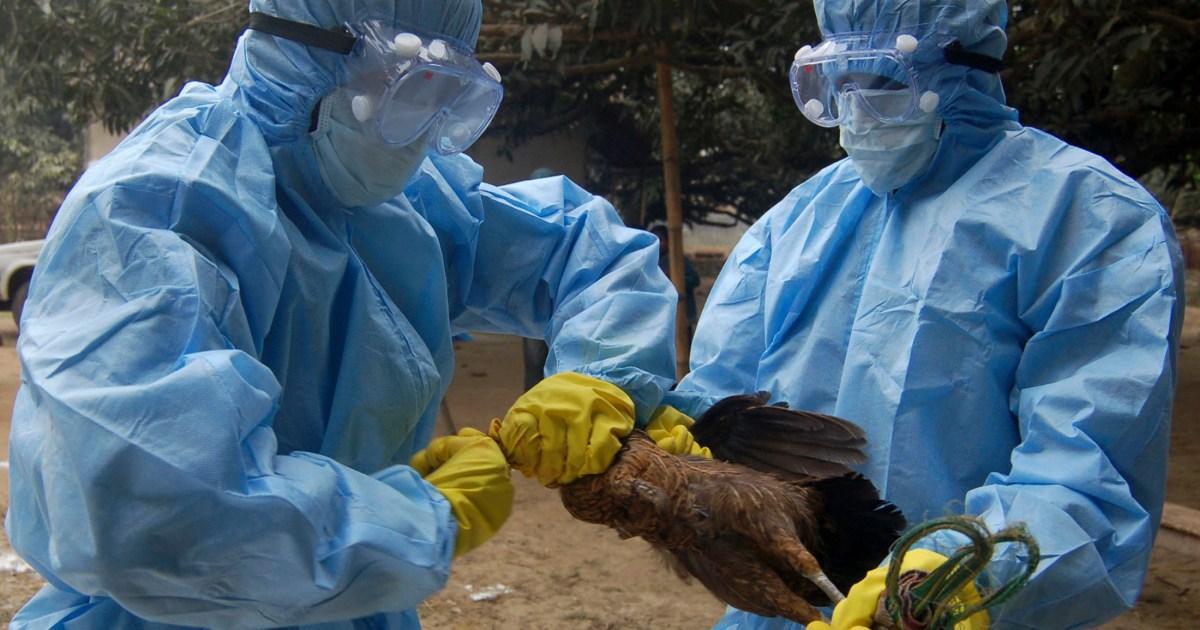 Bird flu cases found in Punjab