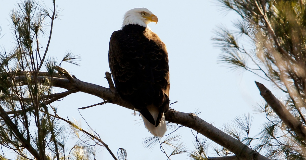 Donald Trump weakens 100-year-old US bird protection law thumbnail