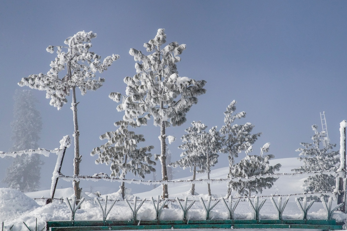 Trees are covered with the hoarfrost on a cold day in Gulmarg, which translates as 'meadow of flowers'. [Dar Yasin/AP Photo]