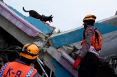 Rescuers have stepped up the search for survivors, deploying sniffer dogs to find anyone left alive in the rubble following Friday's earthquake [Daeng Mansur/AP Photo]