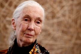 Jane Goodall: To fix the environment, fix poverty