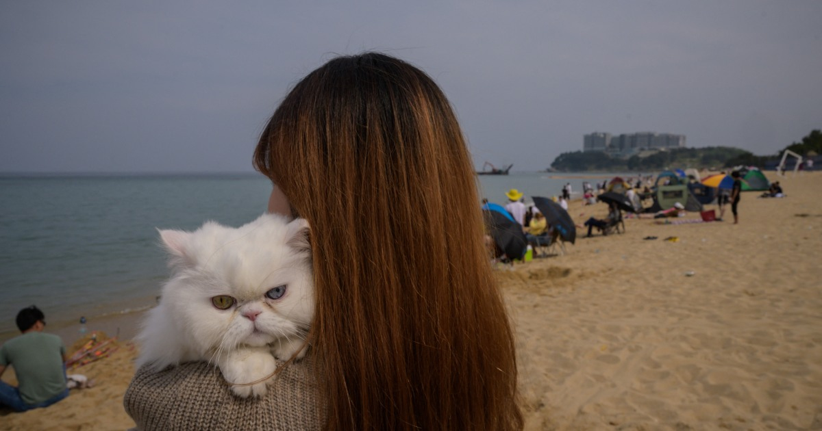 South Korea's Seoul to test pet cats, dogs for COVID