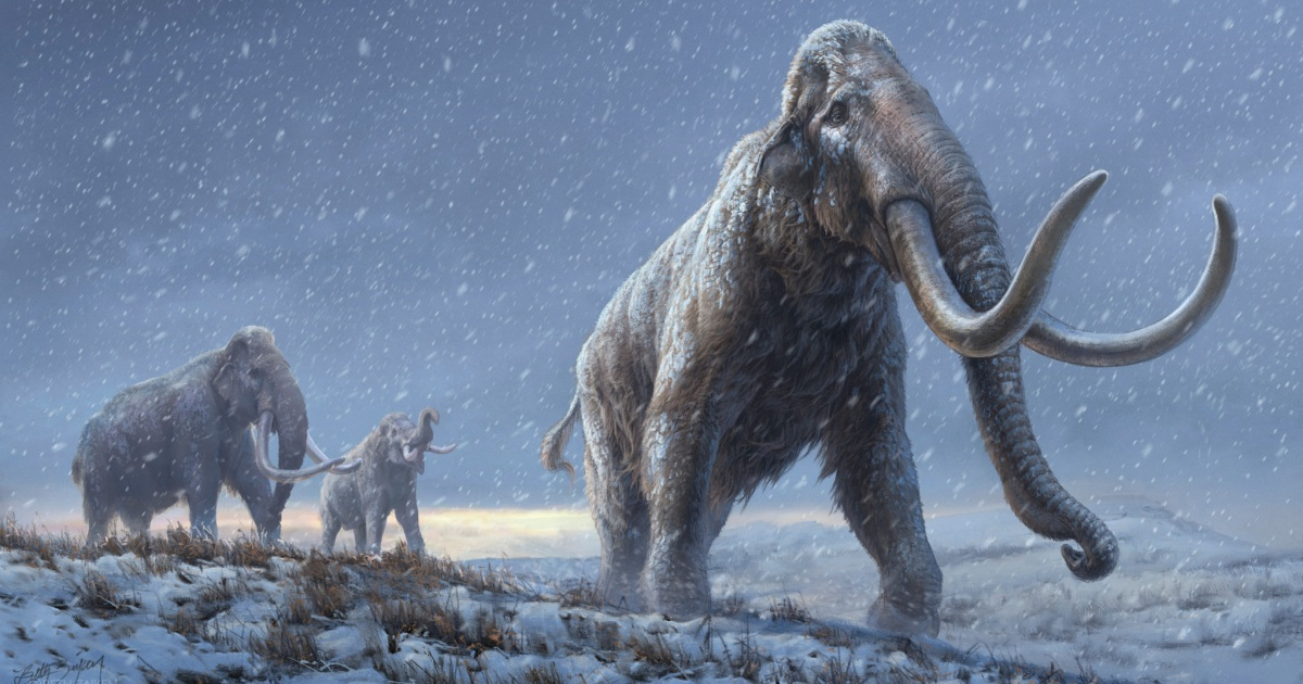 World's oldest DNA sequenced from million-year-old mammoths - Al Jazeera English