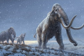 A reconstruction of the steppe mammoths that preceded the woolly mammoth, based on the genetic knowledge from the Adycha mammoth [Beth Zaiken/Centre for Palaeogenetics via AFP]