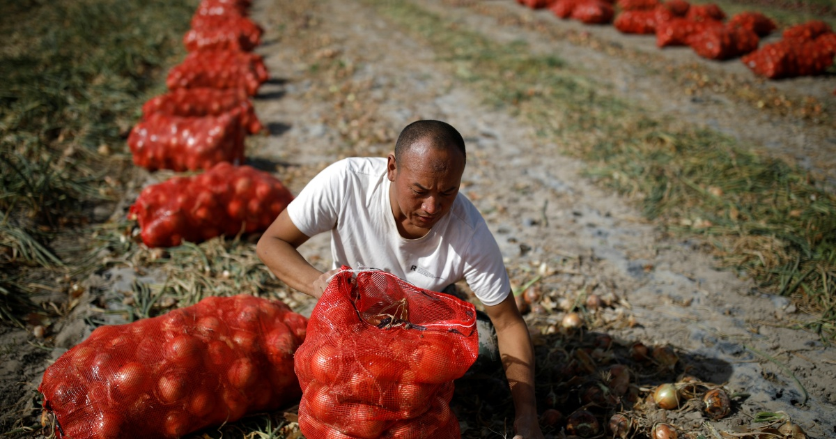 China's 'No 1 document': Beijing steps up focus on food security