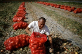 China plans to build a 'national food security industry belt' as part of its latest set of rural policy proposals [File: Carlos Garcia Rawlins/Reuters]