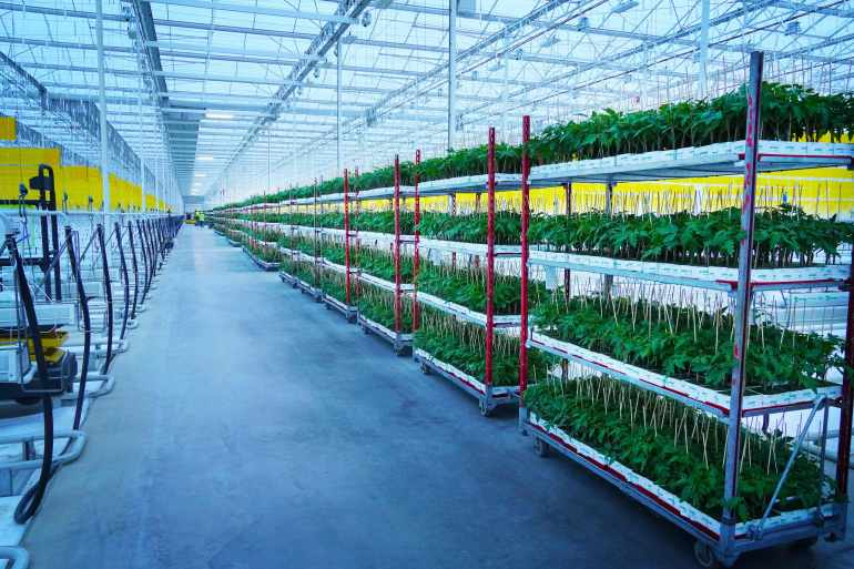 Indoor farming gains ground amid pandemic, climate challenges | Agriculture News