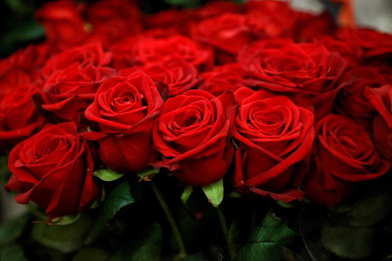 Most of the roses sold in France in the run-up to Valentine's Day have to be imported from countries such as Kenya, resulting in carbon emissions that contribute to climate change [File: Sarah Meyssonnier/Reuters]