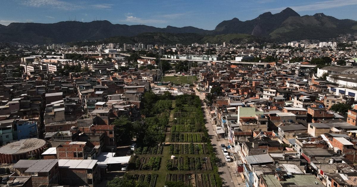 'Food security is security': Brazil's urban farm success story - aljazeera