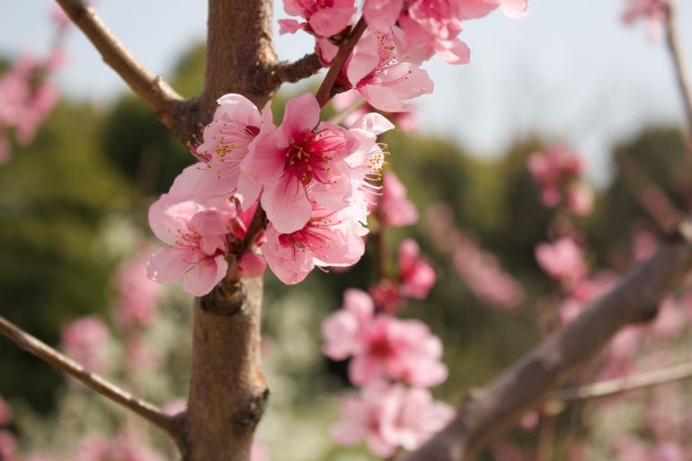 COVID-19 takes spring out of Japan's 'hanami' season | Arts and Culture News