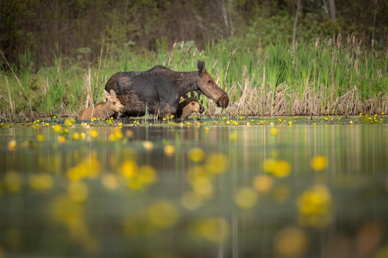 US conservationists, mining firms vie for Minnesota wilderness | Environment News