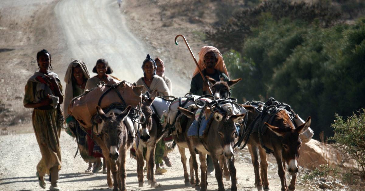Image Over 100 killed in clashes in Ethiopia's Afar, Somali regions