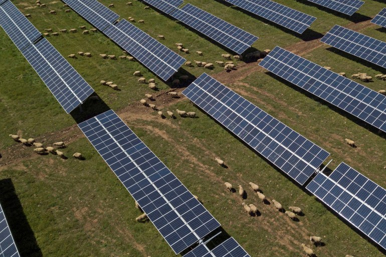 Goats graze in between solar panels in Puertollano, near Ciudad Real, central Spain, on April 10, 2019 [File: Bernat Armangue/AP Photo]