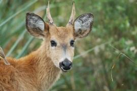 Rewilding Argentina: A journey to help nature heal